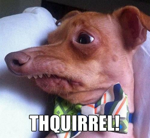 100_THQUIRREL