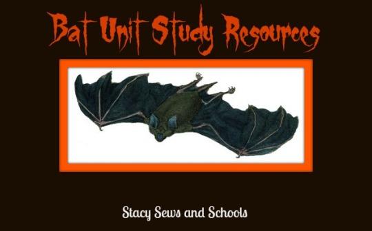 Bat Study Pic