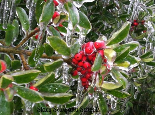 Ice Storm 2013 022